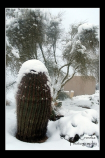 The barrel cactus would be a great foundation for a snowman if it weren't so prickly!