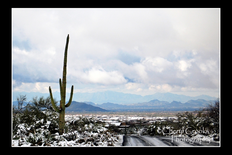 Snow tires aren't very common in Phoenix and neither are snow plows so driving on any roads covered with snow there can be hazardous with even a tiny bit of snow.