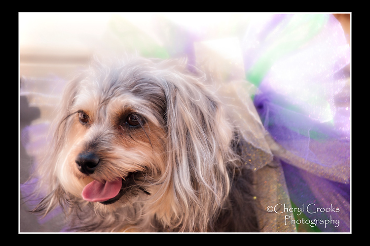 This little cutie flaunted a soft collar in Mardi Gras colors. Looked to me like a little ballerina bow-wow.