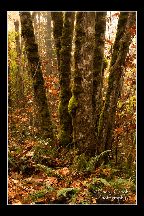 The golden colors of autumn create a rich palette in the woods.