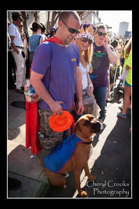 Even the dogs watching the parade came in costume. To Go sported a superman cape and sat right next to me throughout the Barkus parade. Very well-behaved boy!