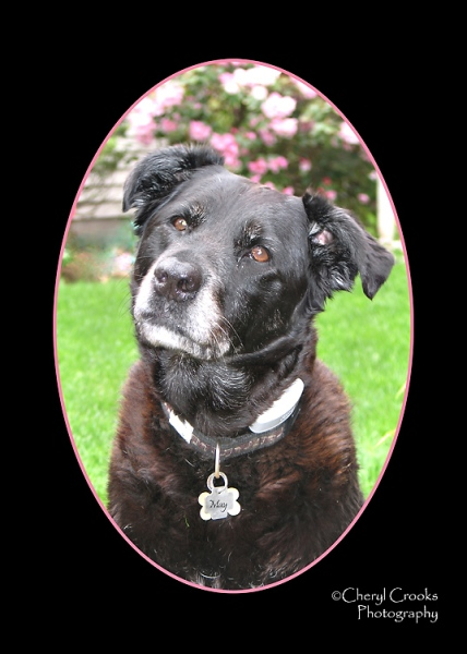 May was my 'studio assistant' and companion for 12 years.  She was the only other 'girl' in our family.