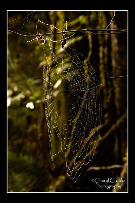 This has been a great fall for spider webs. They are such works of art. This one sparkled in the early morning sun.