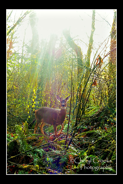 This doe popped out of the woods and was unconcerned about two walkers passing by.