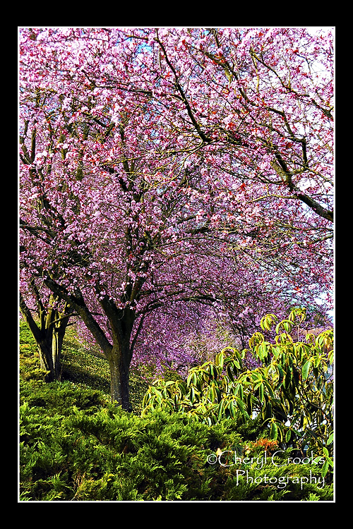 The bright colors of pink and green greeted the spring day.