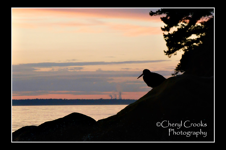 As the sun sets, the lone oystercatcher keeps guard over its island home.