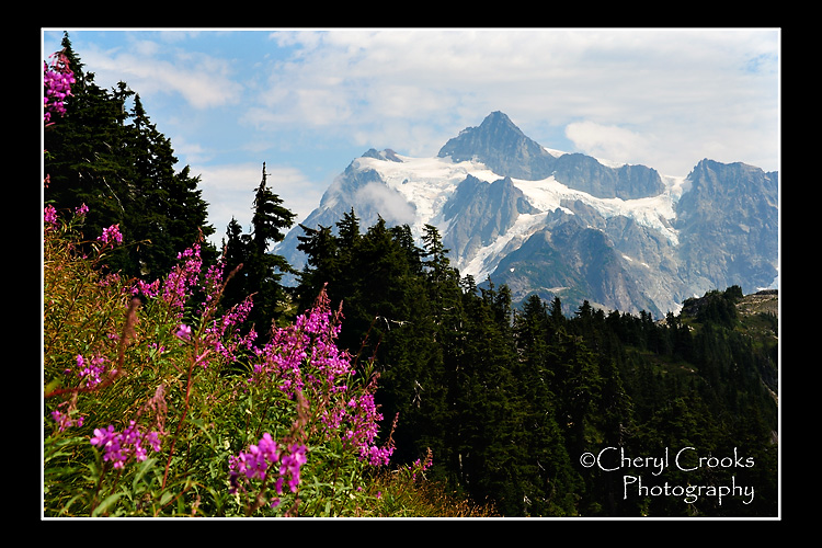 The Fireweed's bright magenta blooms contrast beautifully with the blue and greens of the mountain landscape.