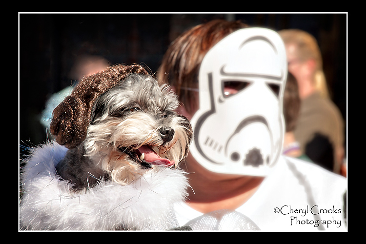 Masquerading as Princess Leia,, this little dog and her Stormtrooper owner were a hit with the spectators.