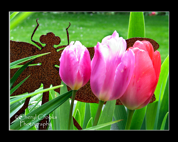 The bright blooms of my tulips pop against the iron dragonfly in my garden.