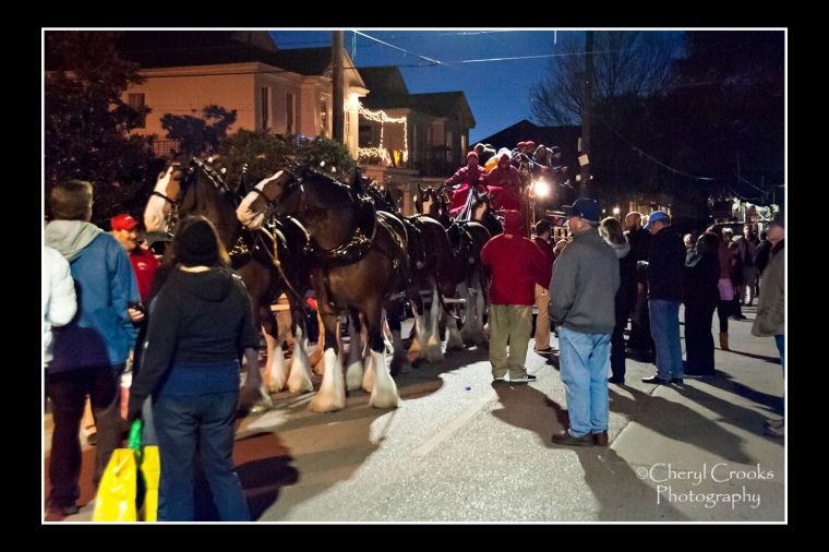 Prior to the parades, the Clydesdales draw fans anxious to get a closer look.