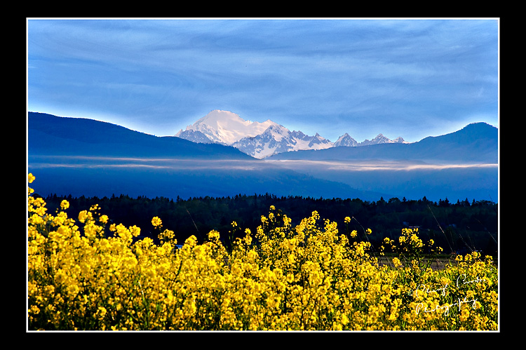 The snow-covered peak of Mount Baker rises in the distance from the Skagit Valley. This was the last photograph I made the morning of my 'field trip.'