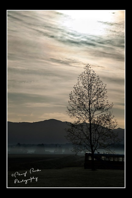A thin layer of fog covered the field as morning began in the Skagit Valley.