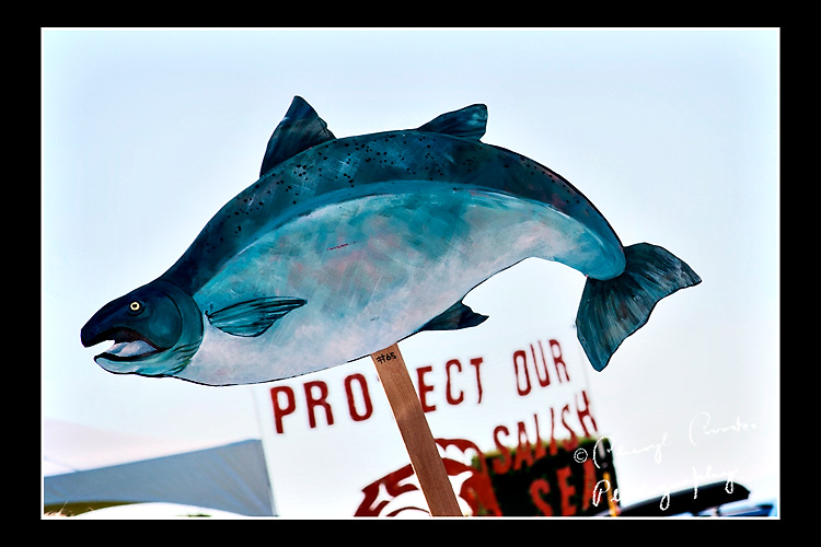 The salmon became a symbol for signs calling for the protection of the Salish Sea during rallies against proposed coal train terminal.